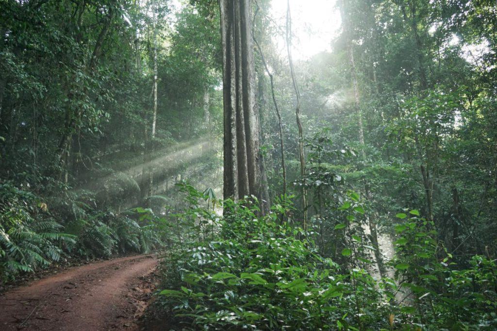uitzicht op de Brownsberg in Suriname