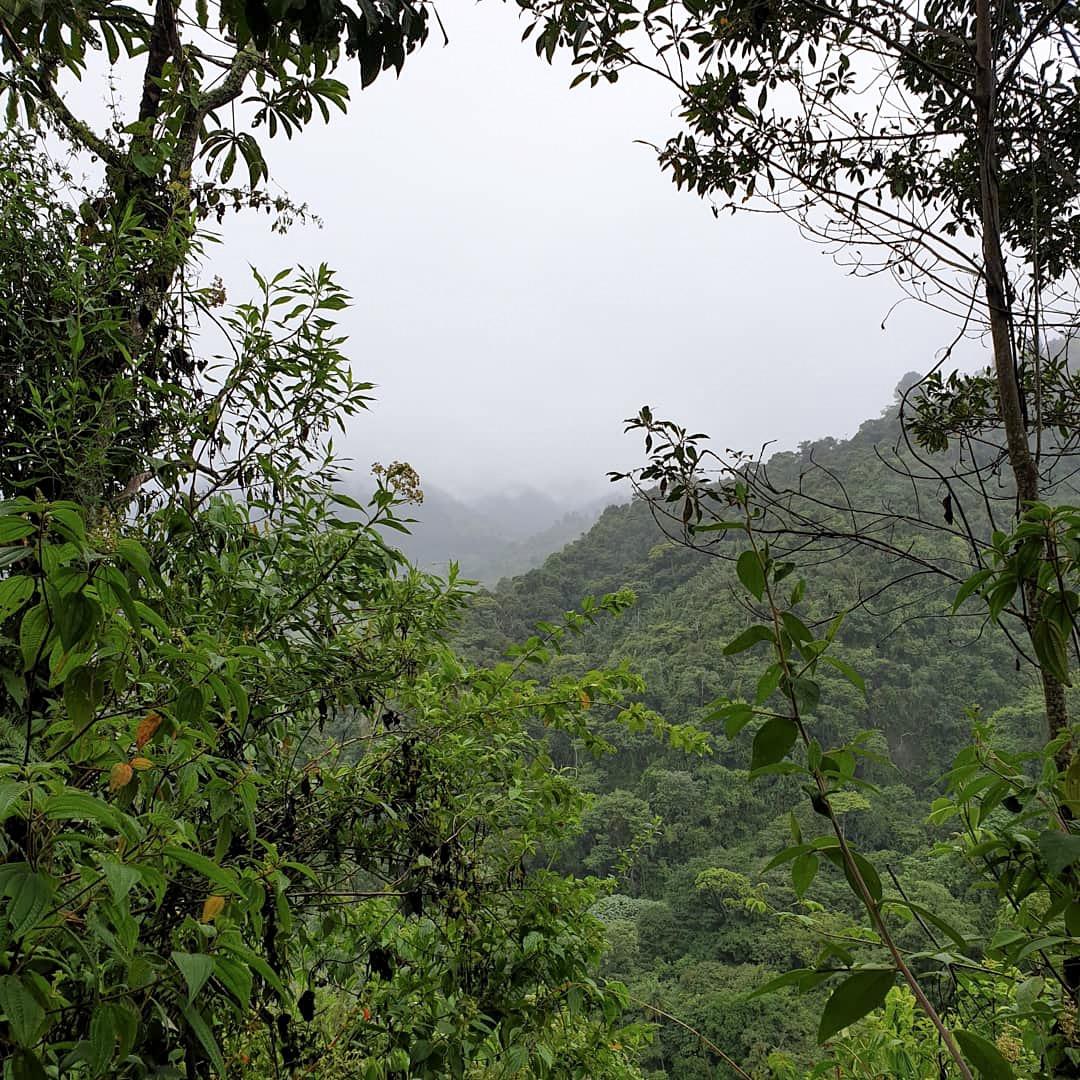 colombia kasaguada jungle tour