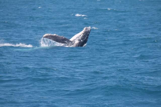 Australie whale spotting