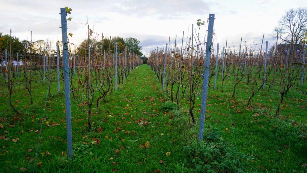 wijngaard hof van 't hogeland de smaak van de wadden