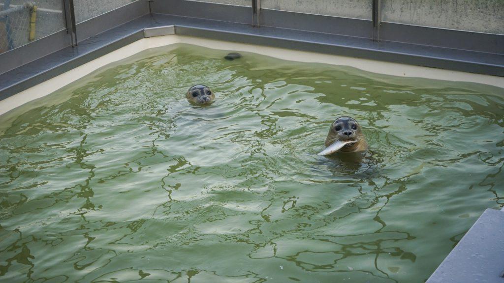 a seal stellendam zeehonden ouddorp