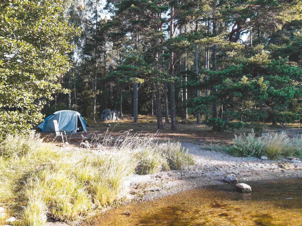 Wildkamperen in Zweden in de bossen