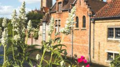 hotspots in Brugge